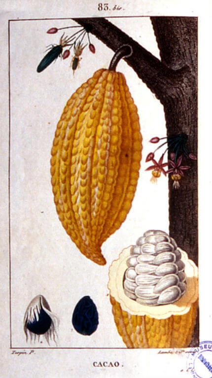 Plantes cultivées dans les plantations coloniales