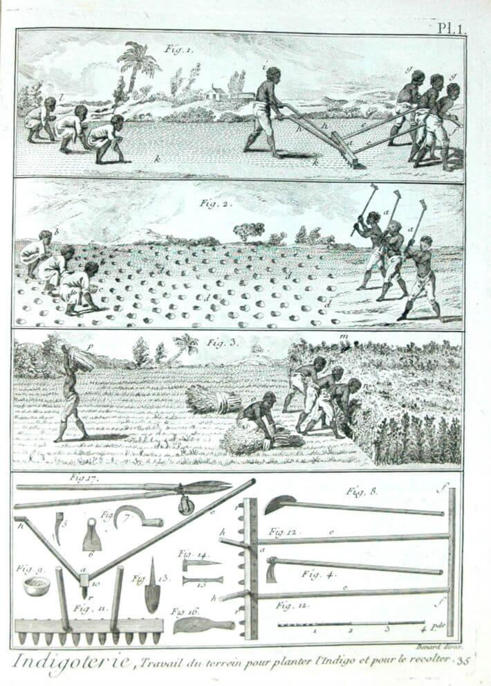 Travail des esclaves dans une plantation d'indigo.