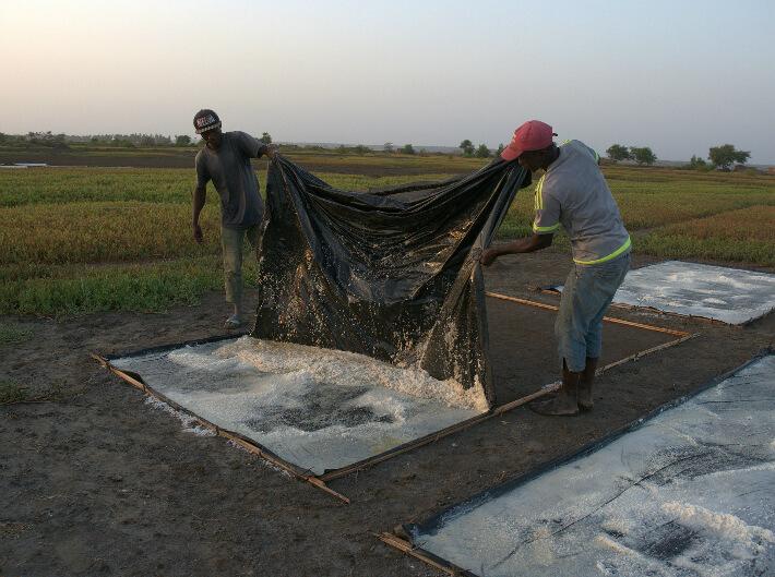 Récolte du sel solaire par la méthode du soulèvement de la bâche - Plaine de Koba, Guinée - © Pierrot Men - 2017