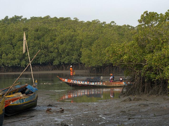 Pirogues sur fond de mangrove à Walia, Guinée - © Pierrot Men - 2017