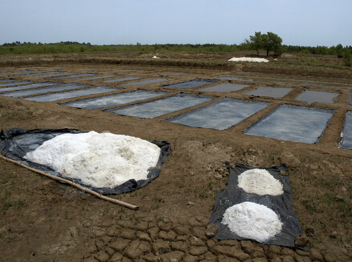 Récolte du gros sel et de la fleur de sel - Marais salant de Syranka, Guinée - © Pierrot Men - 2017