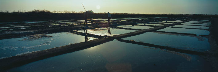 Ile de Ré – Marais salants