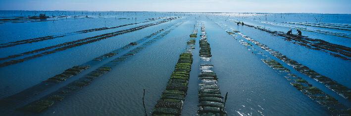 Marennes – Parcs à huîtres